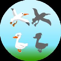Edukida Birds Shapes Unity Kids Educational Game