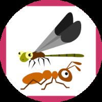 Edukida - Match Insects Unity Kids Game