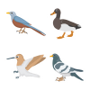 55 Birds Illustration Color Icons Pack