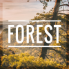 Forest - Tumblr Theme