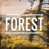 Forest - Tumblr Theme