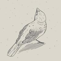 SparrowAndSnow